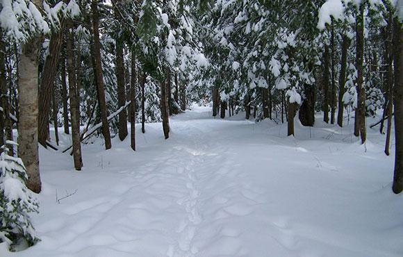 Baille Ard Trail