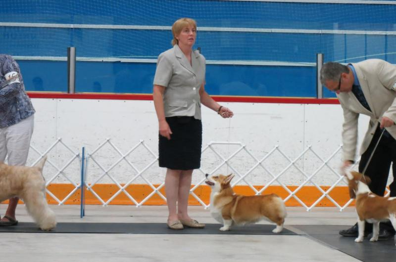 CAPE BRETON KENNEL DOG SHOW AND TRIALS