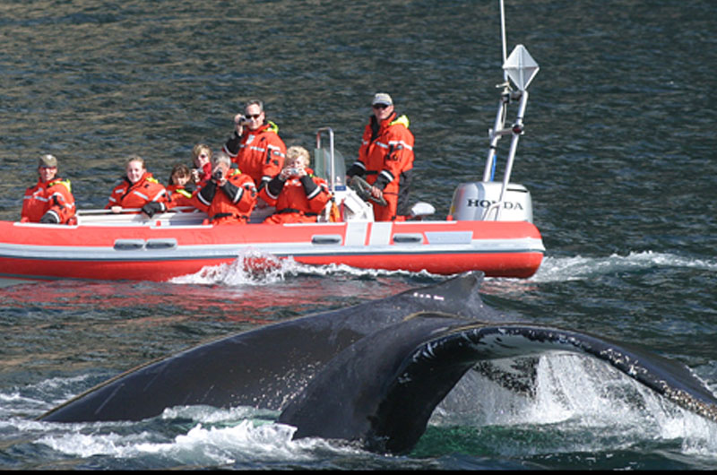 Capt. Mark's Whale & Seal Cruise