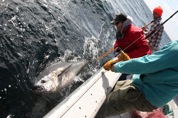 Dawn Treader Tuna Charters