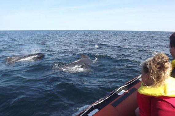 Dixon's Zodiac Seafari - Whale & Coastal Tours