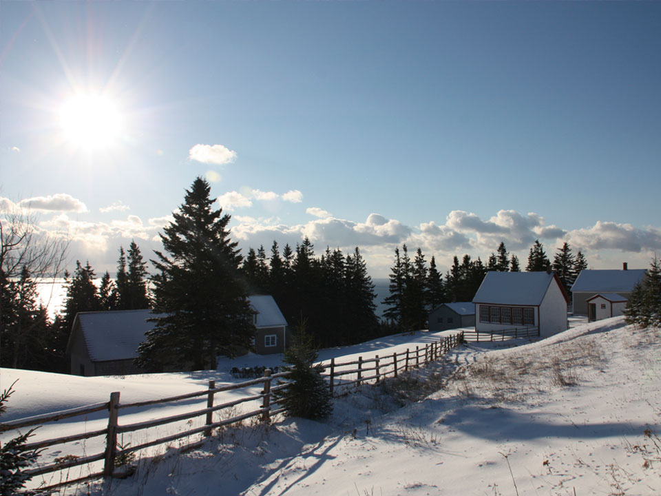 Hector's Point Snowshoe Walks – Sunday Afternoons
