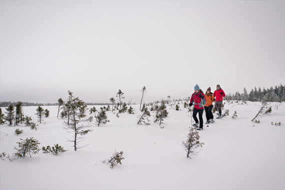 MacLean Road Guided Snowshoe Hike