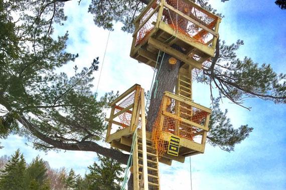 Mountain Pine Adventure