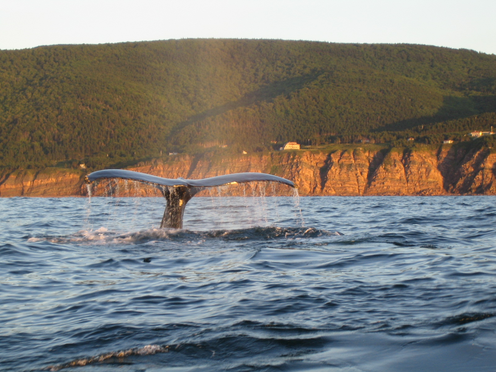 Pleasant Bay Whale Watching
