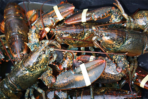 Seaside Lobster Festival – Get trapped in Cape Breton
