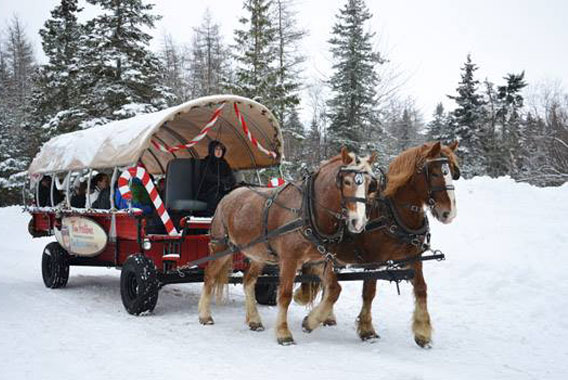 Taste of Winter: Wagon Rides in Wentworth Park