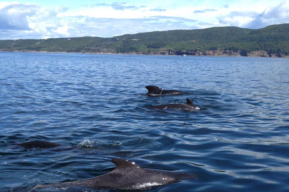Whale & Seal tours
